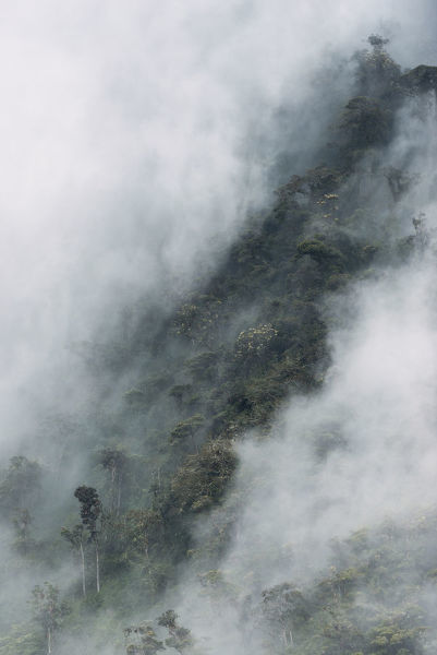 Cloud forest canopy, Andes, Ecuador